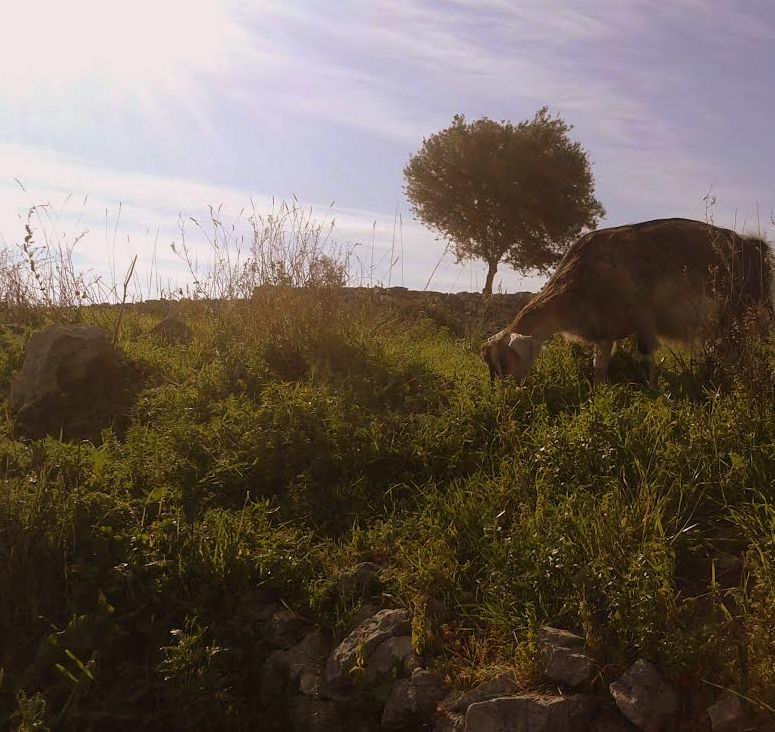 Paesaggi rurali,Gargano